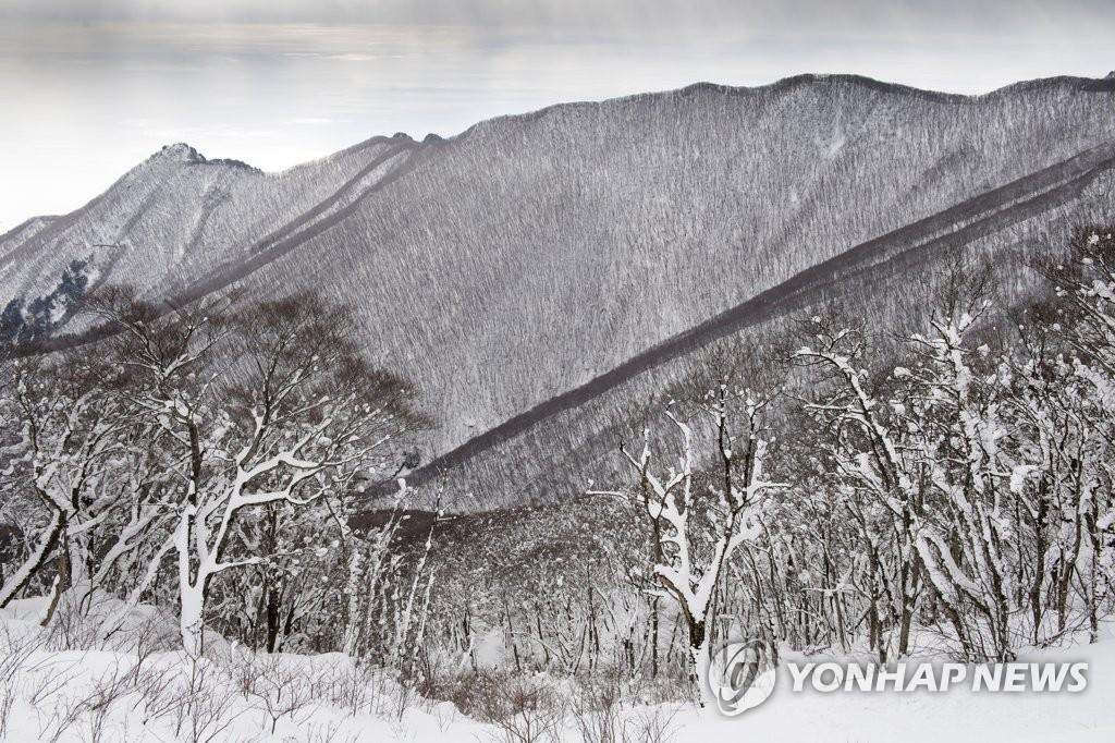郁陵岛的水墨雪景