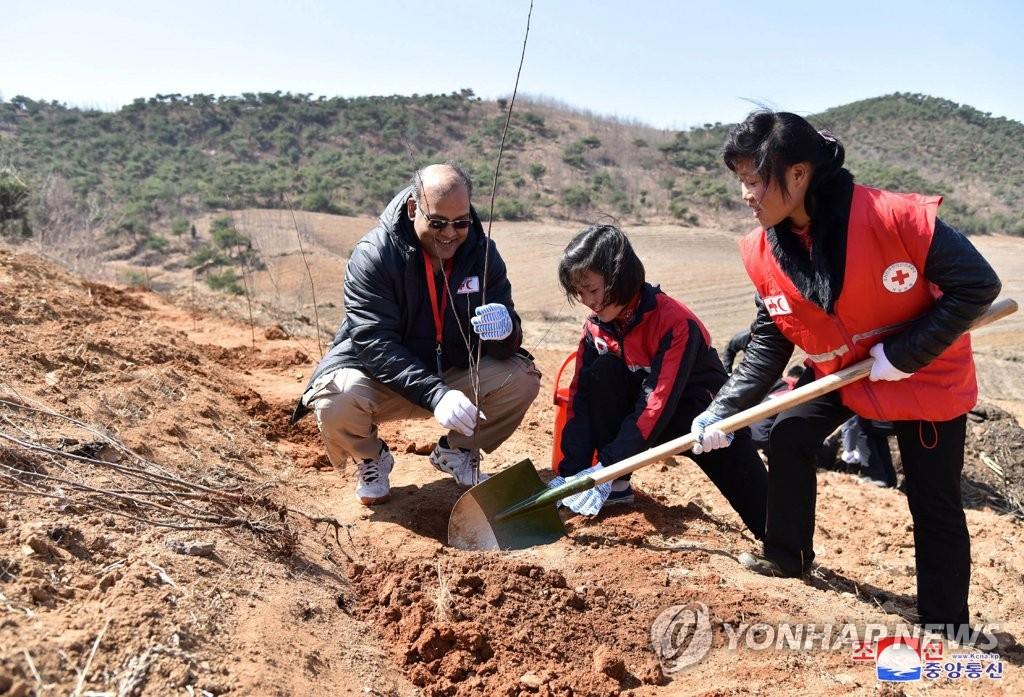 朝鲜青少年红十字植树活动