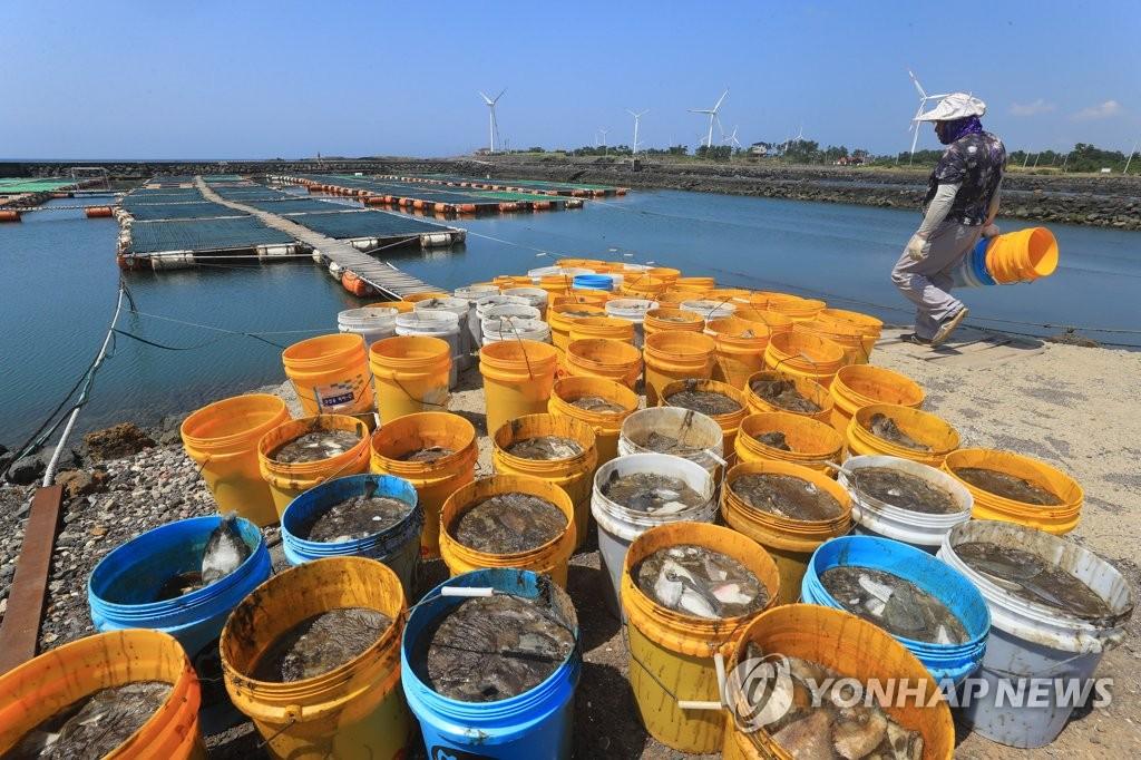 持续高温致鱼死亡