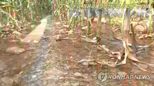 调查:朝鲜粮食产量创十年新低