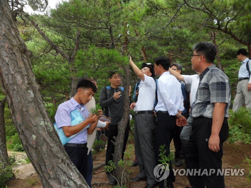 8月8日,在朝鲜金刚山,韩朝联合开展松树病虫害实地调查。(韩联社/统一部供图)