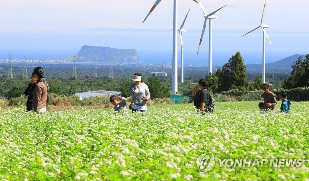 去年济州接待中国游客同比增49%
