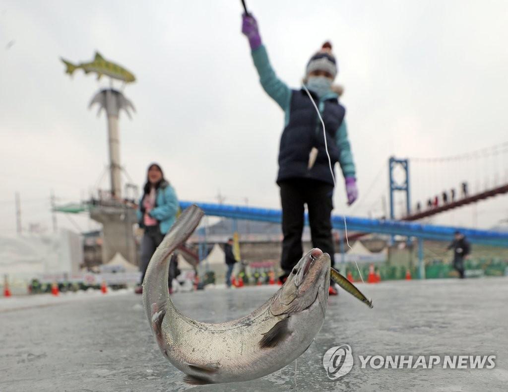 鳟鱼庆典小游客冰钓上钩。(韩联社)