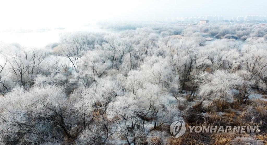 资料图片:1月22日上午,由于连日低温天气,韩国江原道春川市的昭阳江出现雾凇,洁白晶莹的霜花挂满树枝,宛如画卷。 韩联社