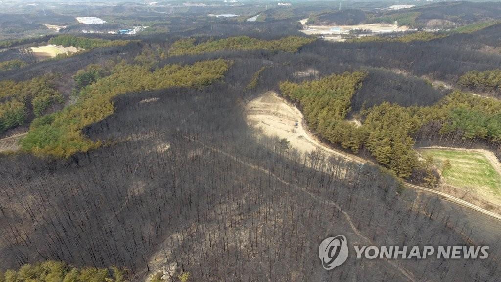 资料图片:受灾山林(韩联社)