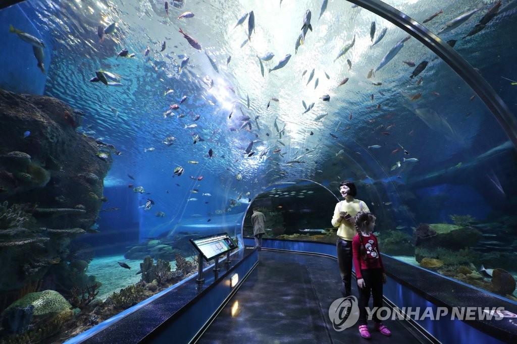 俄罗斯岛海洋水族馆(韩联社)