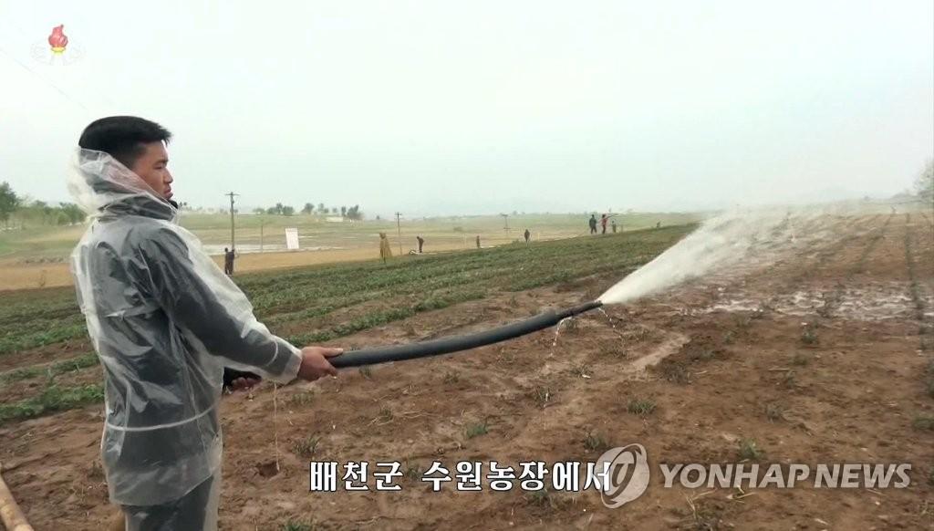 资料图片:5月15日,朝鲜央视报道称朝鲜旱情严重,部分地区农业生产受到影响。图为黄海南道白川郡的一名农民在浇水。 韩联社/朝鲜央视截图(图片仅限韩国国内使用,严禁转载复制)