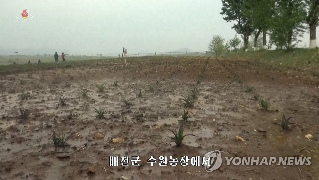 朝鲜最大稻区旱灾严重插秧推迟