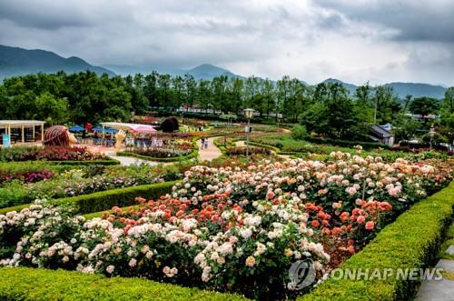 谷城国际蔷薇节开幕