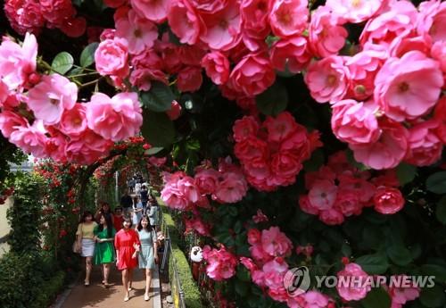 漫步玫瑰隧道