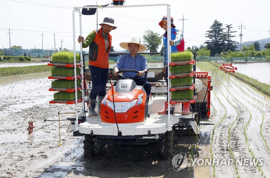 文在寅访问庆州玉山村体验插秧