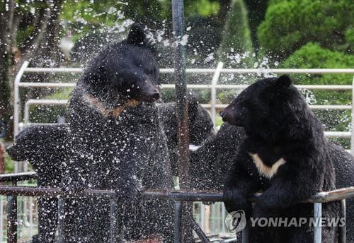 熊也爱冲凉