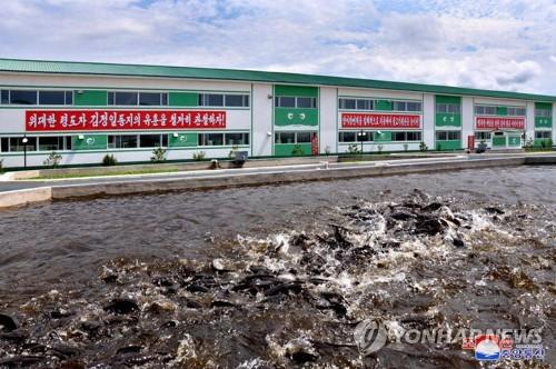 朝鲜云山鲶鱼工厂竣工