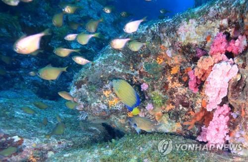 美丽的珊瑚礁