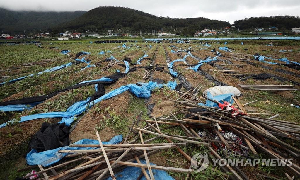 """韩国政府指定台风""""玲玲""""特别灾区"""
