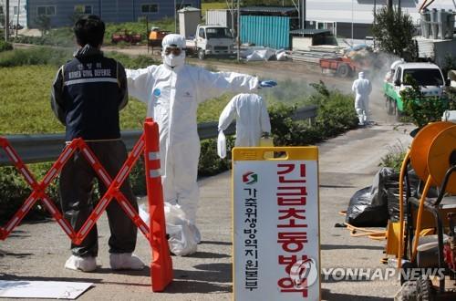 朝媒报道韩国非洲猪瘟疫情消息