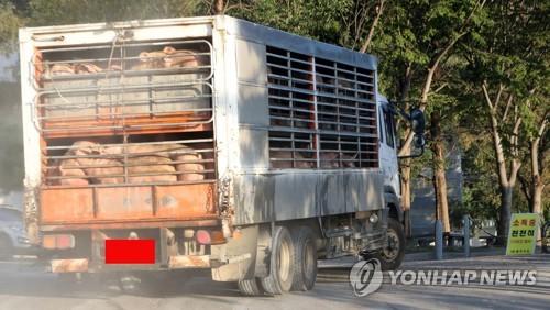 韩国解除生猪禁运