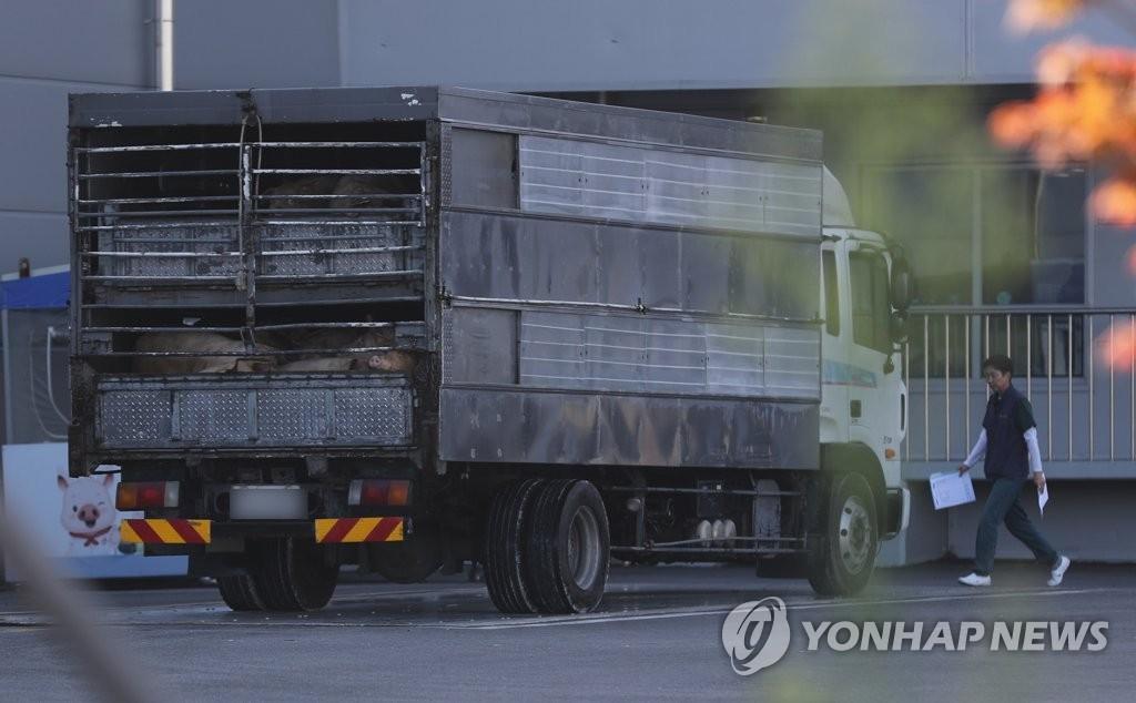 韩国解除生猪禁运令