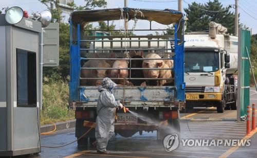 韩国新增非瘟疑似病例 确诊结果或今晚出炉