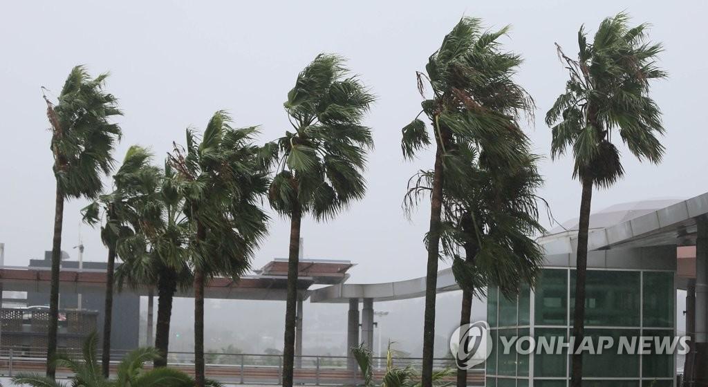 9月22日,在济州国际机场前,椰子树被台风吹得剧烈摇晃。 韩联社