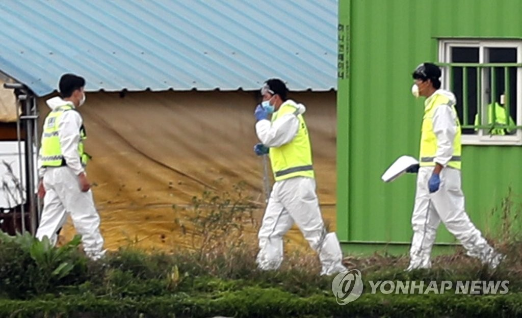 资料图片:防疫部门准备扑杀生猪 韩联社