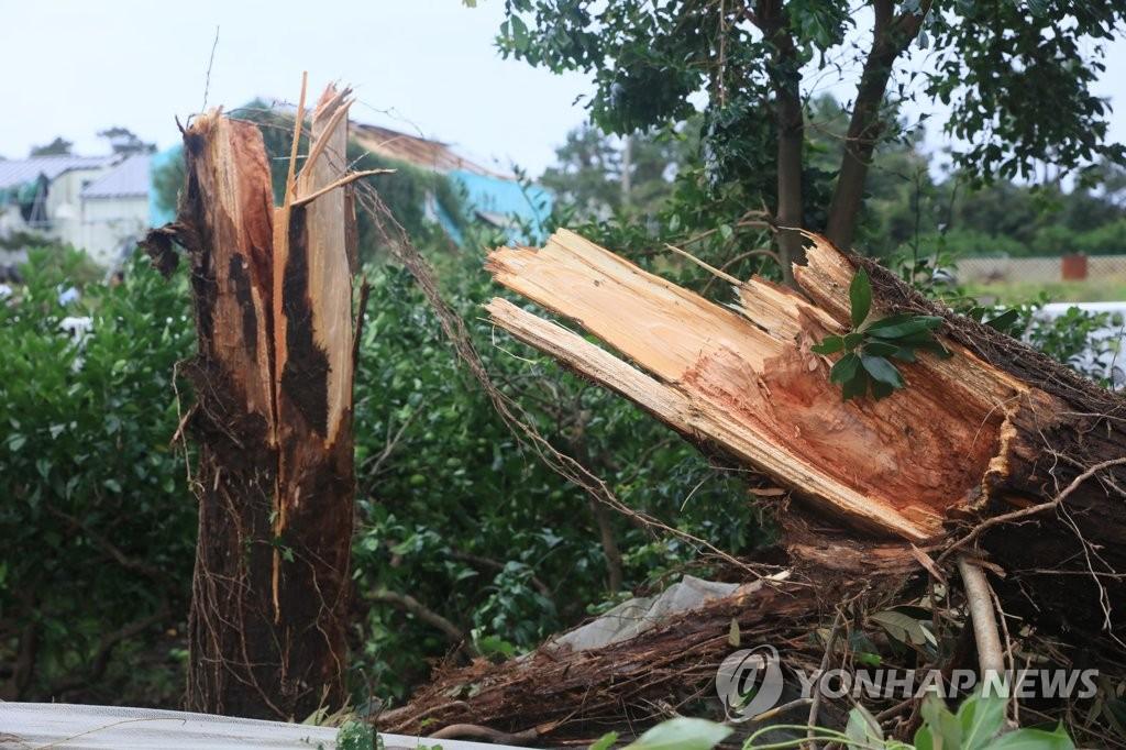 """台风""""米娜""""今晚将在韩国南部海岸登陆"""