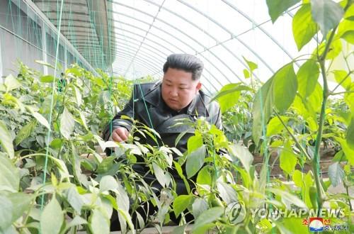 统计:朝鲜2018年贸易总额因制裁减半