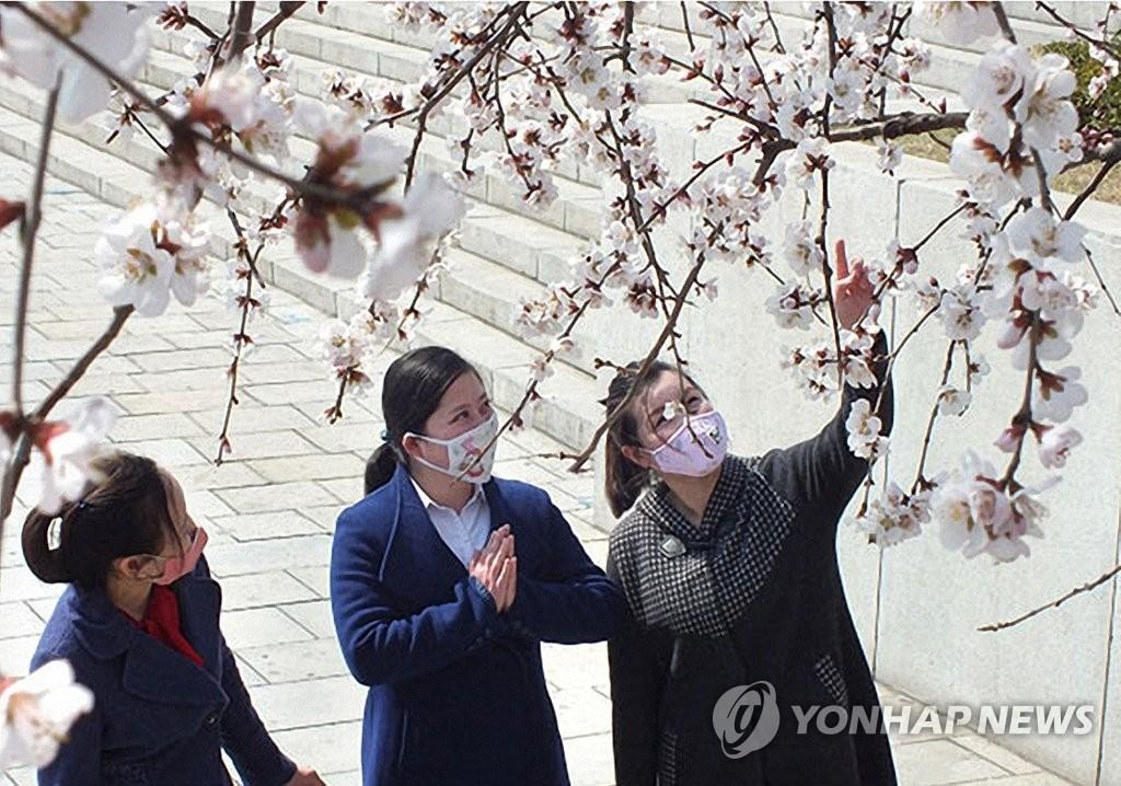 朝鲜居民戴口罩赏花