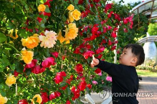 万朵玫瑰齐盛开