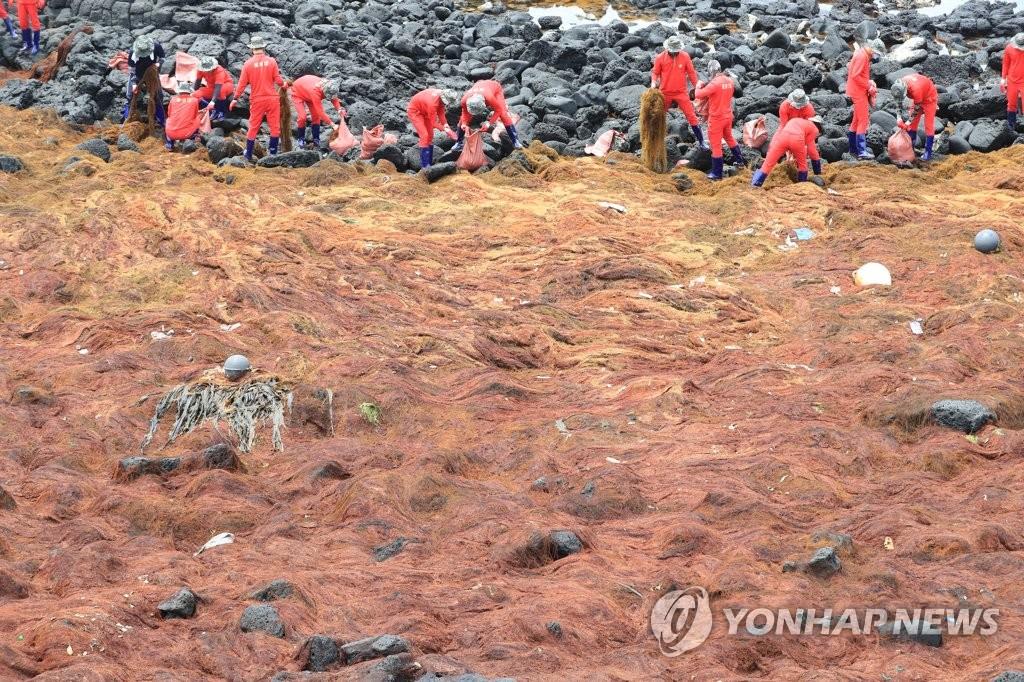 韩济州沿海来自中国的铜藻量创近五年新高