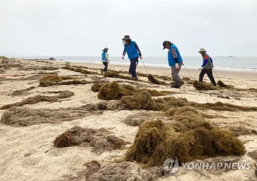 韩研究团队在自华流入铜藻中发现抗氧化成分