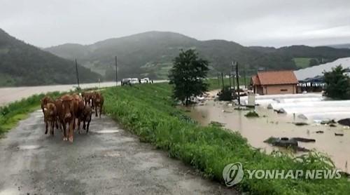 详讯:韩国十天暴雨致近7000人受灾