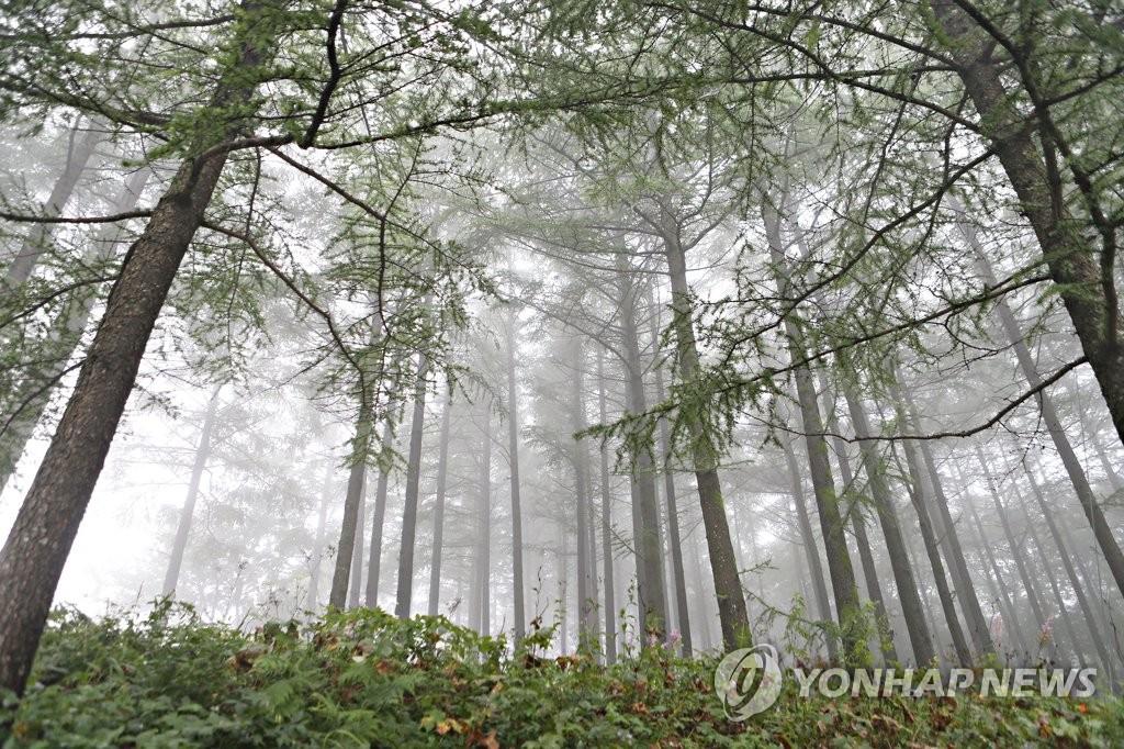 林间云雾缭绕