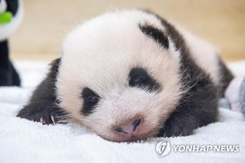 熊猫宝宝公开征名