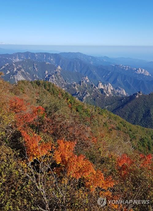 雪岳山的第一抹红叶