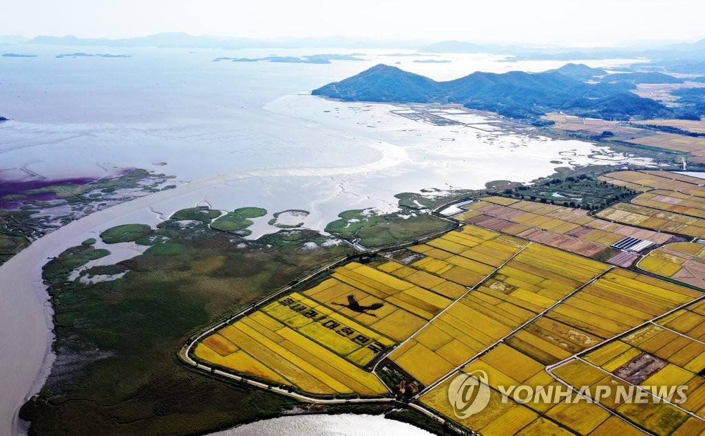 """资料图片:10月5日,全罗南道顺天市顺天湾湿地,一幅写有""""加油,大韩民国""""的稻田画铺在坝子上,美不胜收。 韩联社"""