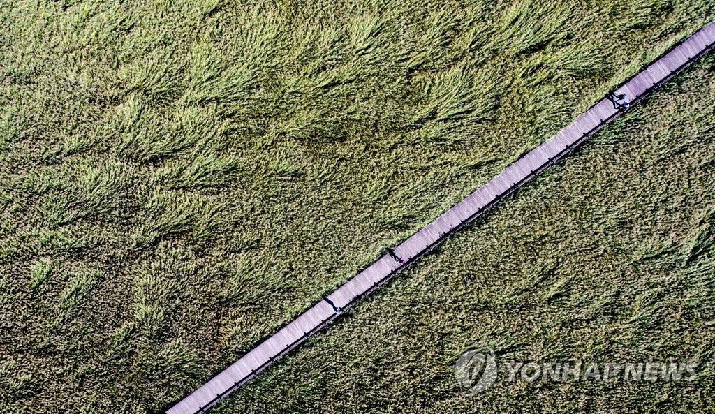 资料图片:全罗南道顺天市顺天湾湿地 韩联社