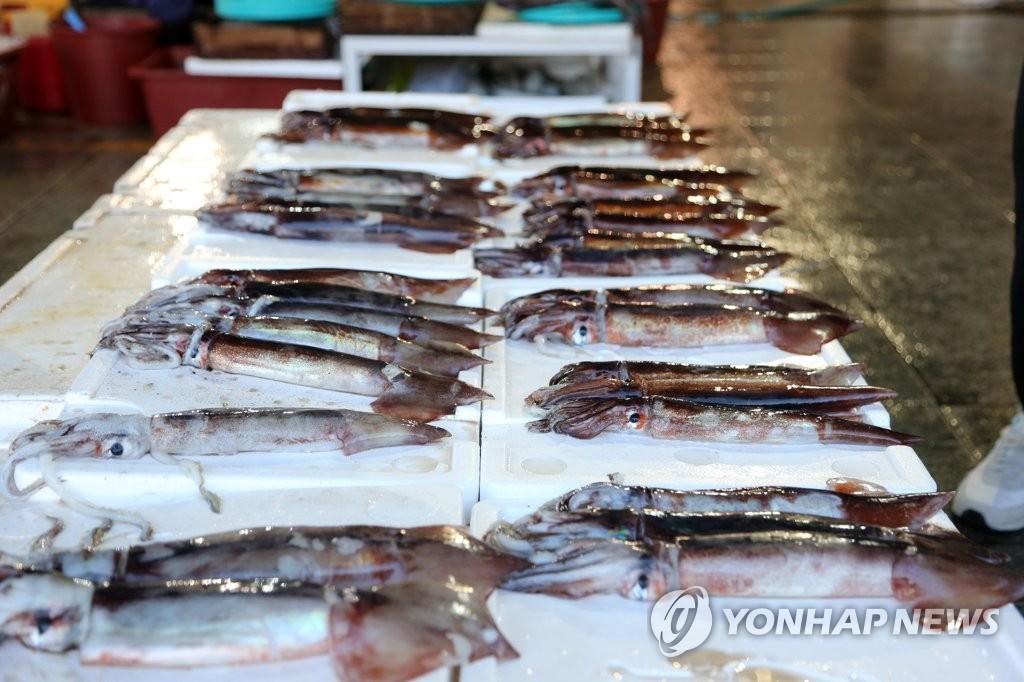 韩国捕鱼量近50年增长23% 暖水鱼产量大增