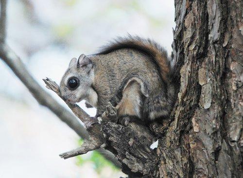 飞鼠栖息全南生态林