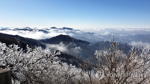 雾凇挂枝头
