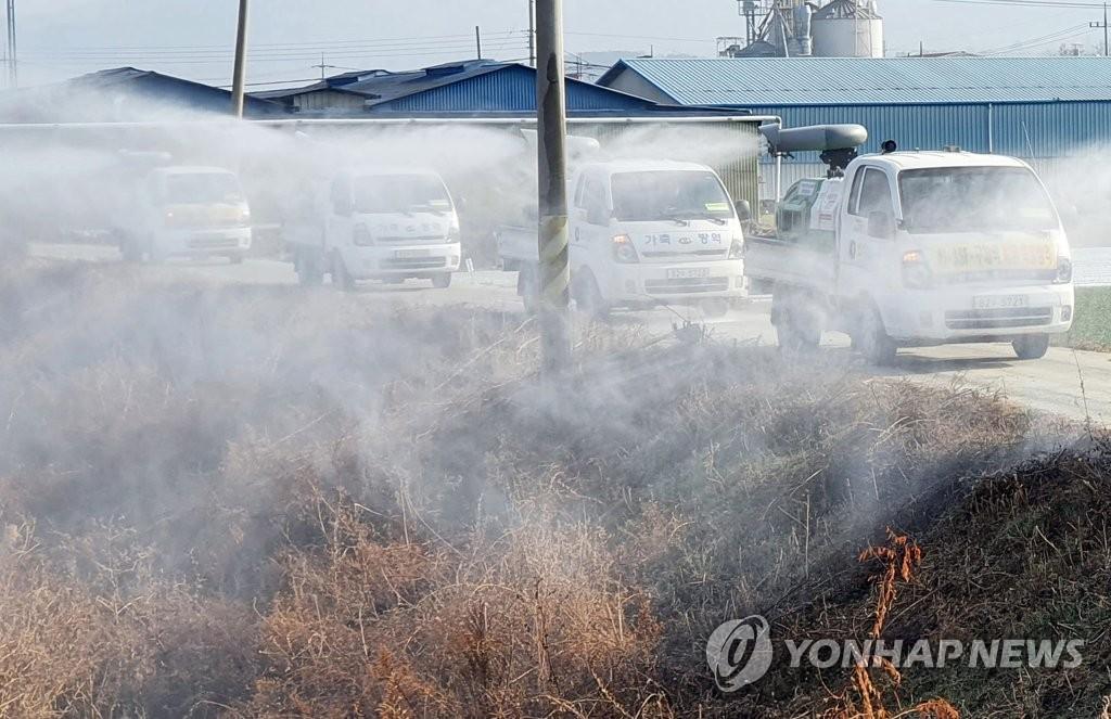 韩国今发生三起禽流感疫情
