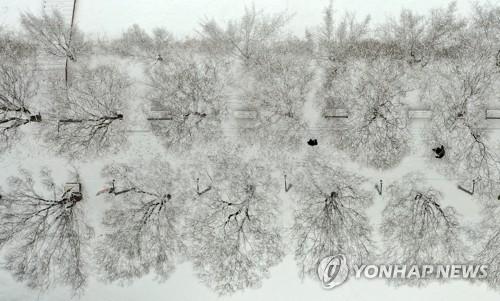 雪落林间如水墨画