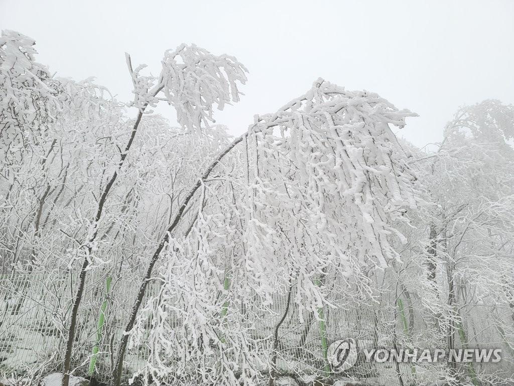 江原道雪景