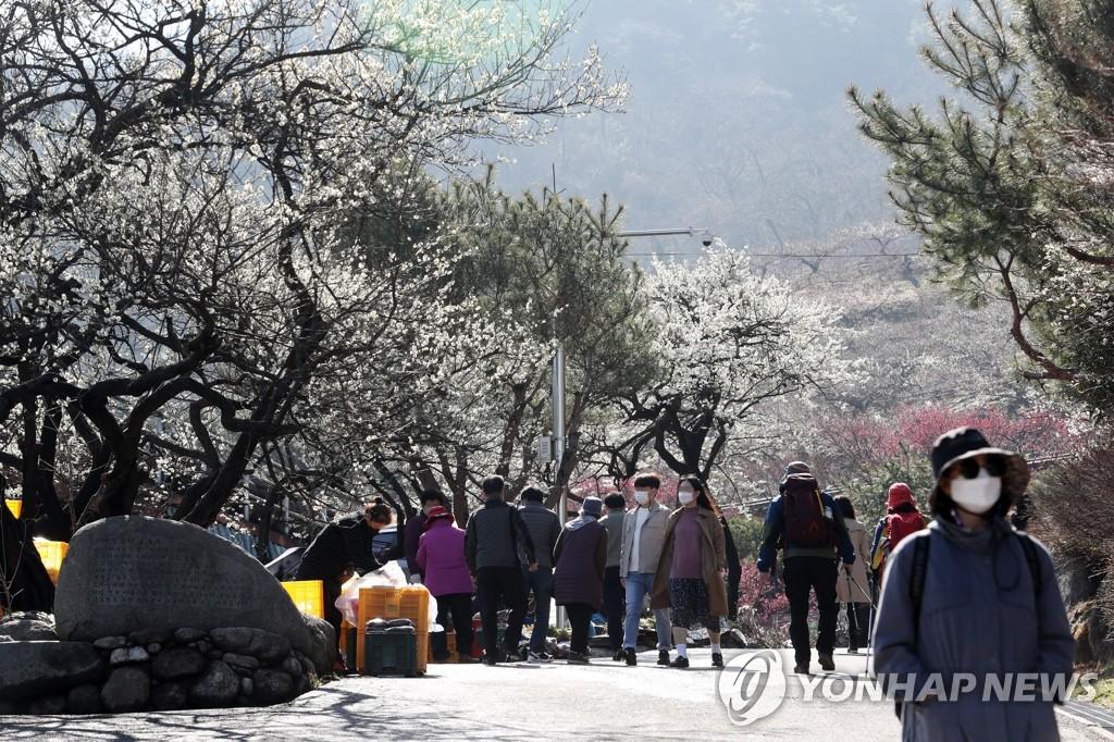 资料图片:3月5日,在位于全罗南道光阳市多鸭面的光阳梅花村,游客佩戴口罩赏梅。 韩联社