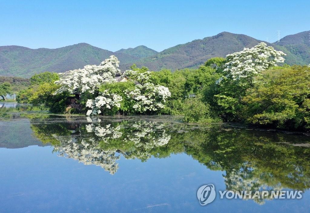 春意盎然的密阳位良池