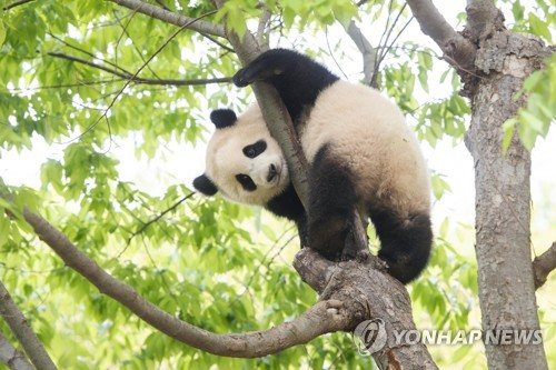 爱宝乐园为大熊猫福宝办一周岁庆生活动