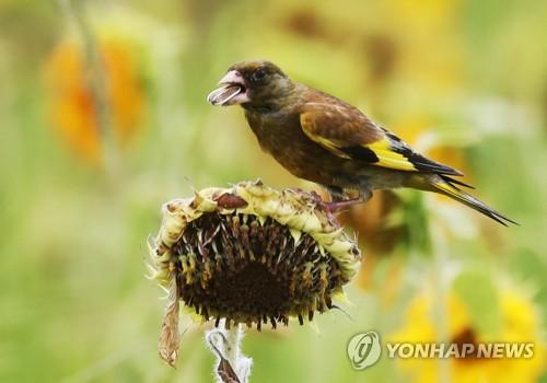 小鸟嗑瓜子