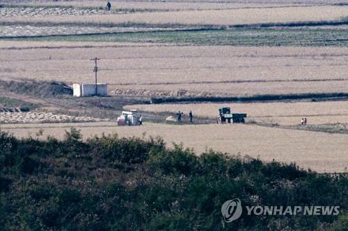 朝鲜居民收割水稻